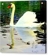 Who Is Afraid Of The Big White Swan  Acrylic Print by Hilde Widerberg