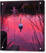 Swan In A Sunset Acrylic Print