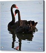 Swan Lake 5 Acrylic Print