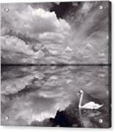 Swan Lake Explorations B W Acrylic Print
