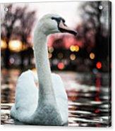 Swan Lake Night 2 Acrylic Print