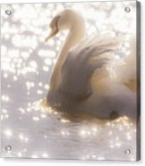 Swan Of The Glittery Early Evening Acrylic Print