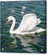 Swan On Lake Geneva Switzerland  Acrylic Print
