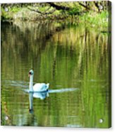 Swan On The Cong River Cong Ireland Acrylic Print