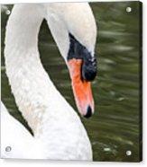 Swan Profile Acrylic Print