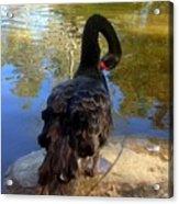 Swan Self Care Acrylic Print