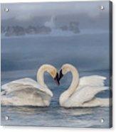 Swan Valentine - Blue Acrylic Print