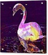 Swan Water Bird Water River  Acrylic Print