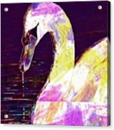 Swan White Water Bird White Swan  Acrylic Print
