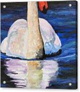 Swan Wildlife Art Acrylic Print