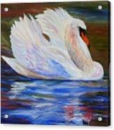 Swan Wildlife Painting Acrylic Print