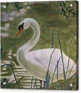 Swanlike Neck Acrylic Print