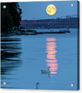 Swans And The Moonrise In Stockholm Acrylic Print