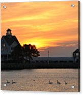 Swans At Sunrise  Acrylic Print