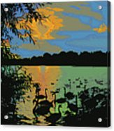 Swans At Sunset Acrylic Print