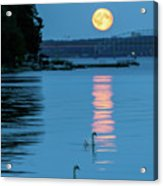 Swans Gliding Into The Moonlight During A Moonrise In Stockholm Acrylic Print
