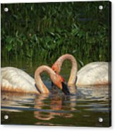 Swans In A Pond  Acrylic Print