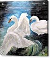 Swans In Love Acrylic Print