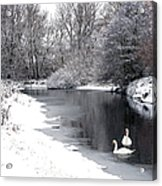 Swans In The Snow Acrylic Print