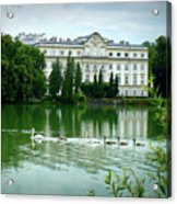 Swans On Austrian Lake Acrylic Print