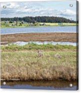 Swantown Lake Estuary Acrylic Print