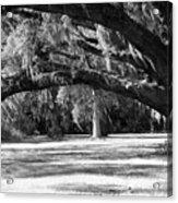 Swaying Oak  Acrylic Print