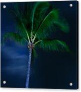 Swaying Palm Tree Acrylic Print