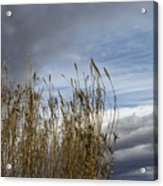 Sweeping The Clouds Away Acrylic Print