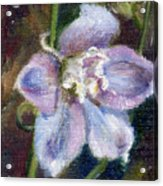Sweet Bloom Aceo Acrylic Print