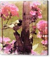 Sweet Chickadee Acrylic Print