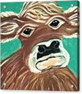 Sweet Cow Acrylic Print