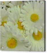 Sweet Daisy Faces Acrylic Print