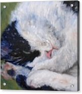 Sweet Dreams Acrylic Print by Debra Mickelson