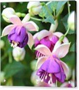 Sweet Fuchsia Flowers Acrylic Print