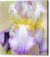 Sweet Iris Pastel Acrylic Print
