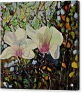 Sweet Magnolias Acrylic Print