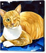 Sweet Melon - Ginger Tabby Cat Painting Acrylic Print
