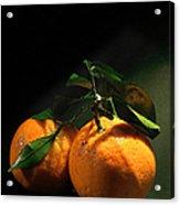 Sweet Orange Acrylic Print