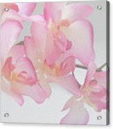 Sweet Orchid Acrylic Print