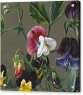 Sweet Peas And Violas Acrylic Print