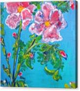 Sweet Pea Flowers On A Vine Acrylic Print