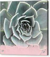 Sweet Pink Paint On Succulent Acrylic Print
