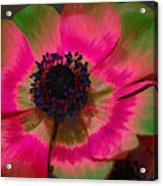 Sweet Poppy Seed Acrylic Print