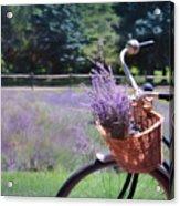 Sweet Ride Acrylic Print