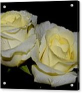 Friendship Roses Acrylic Print