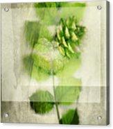Sweet Rustic Pine Acrylic Print