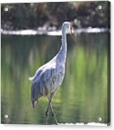 Sweet Sandhill By The Pond Acrylic Print