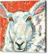 Sweet Sheep Acrylic Print