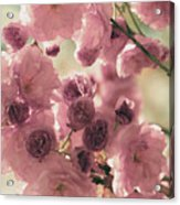 Sweet Spring Blossoms Acrylic Print