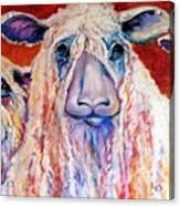 Sweet Wensleydales Sheep By M Baldwin Acrylic Print by Marcia Baldwin